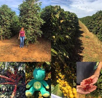 Brazil Fazenda Pantano