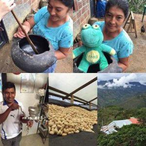 Finca La Cumbre – La Piramide contributor (Cauca, Colombia)