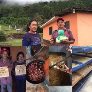 Finca Pedreros – La Piramide Contributor 3 (Cauca, Colombia)