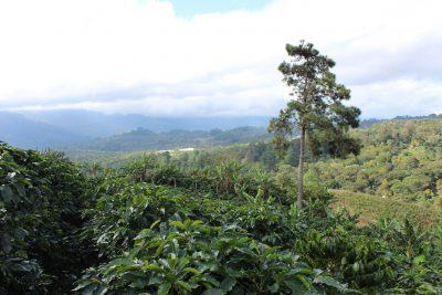 Vista of Finca Altos Erapuca