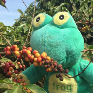 Lessons learnt about Brazilian coffee Apr 2016
