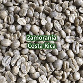 Green Coffee - Zamorania Costa Rica
