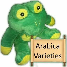 Arabica varieties
