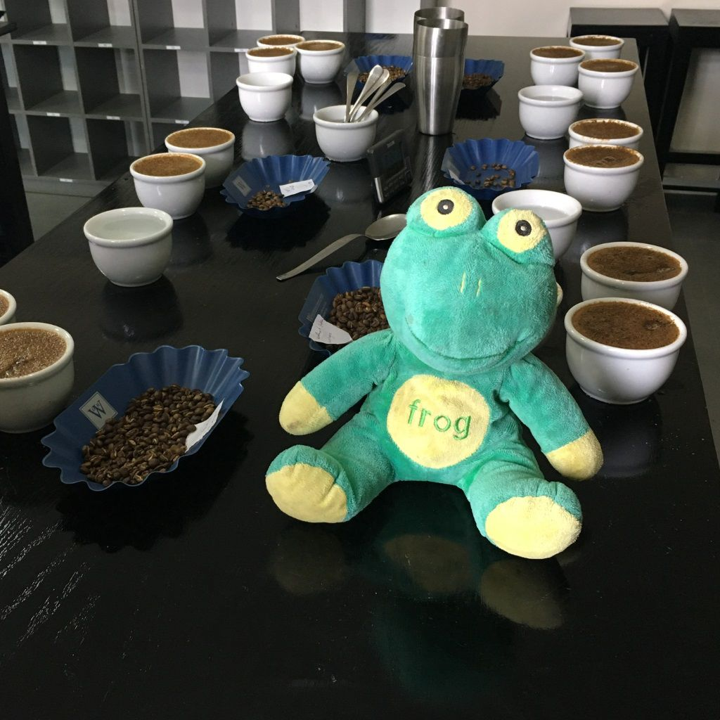 Frog Q At Addis Export Cupping