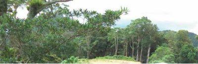 Nicaraguan Divinia Prov View
