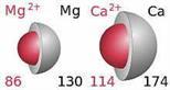MagnesiumNCalcium