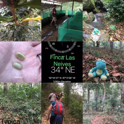 Visit to Finca Las Nieves, Oaxaca, Mexico – a biodiverse coffee farm
