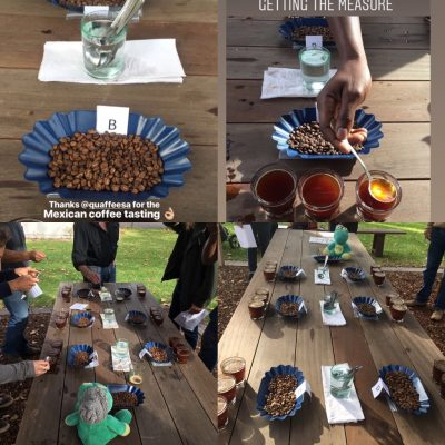 Feedback from public cupping of Mexican coffees