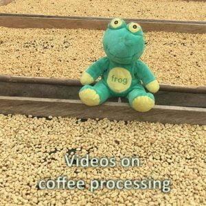 Videos on coffee processing